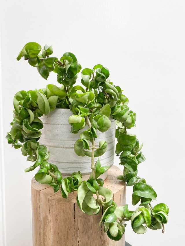 Remarkably, These 5 Plants Won't Need to Be Repotted This Decade | Hunker