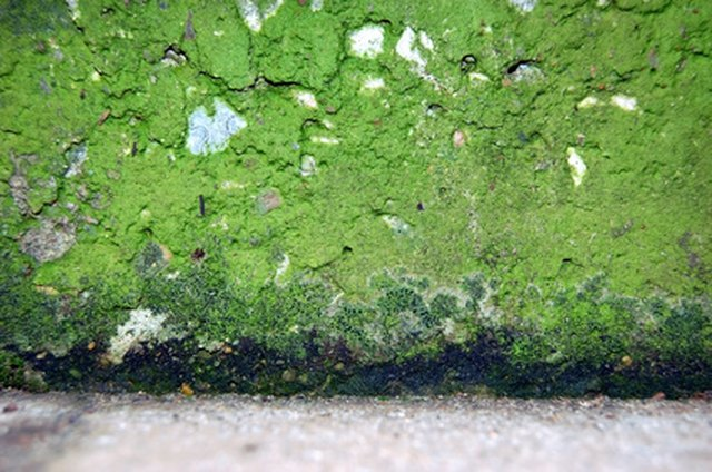 How To Remove Green Mold From Concrete Hunker