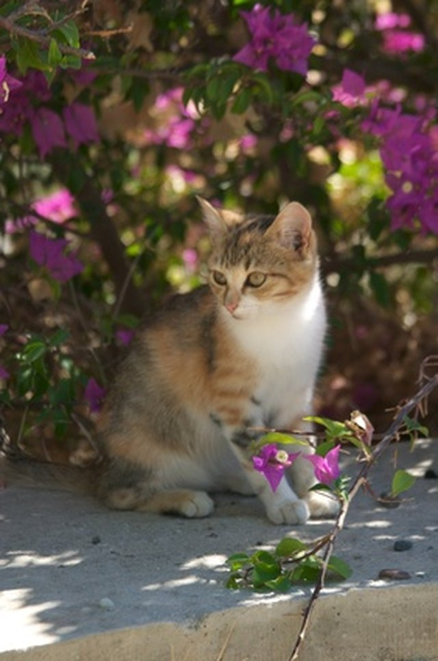 Are petunias poisonous to cats hunker function mightylinksfo