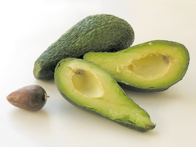 How to Grow Avocados in Missouri | Hunker