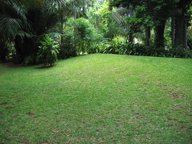 How to Dig Up a Lawn to Replant Grass Seed | Hunker