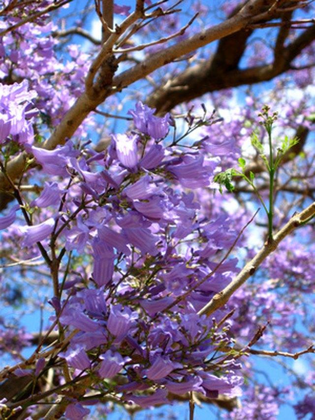 Spring purple flowering trees hunker redbud trees mightylinksfo