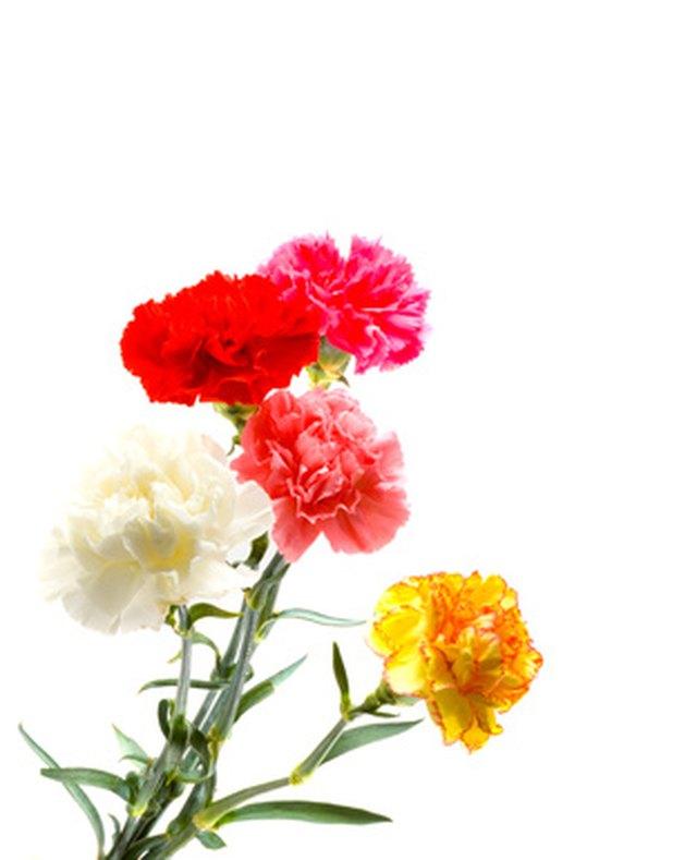 Flowers That Symbolize New Beginnings Hunker
