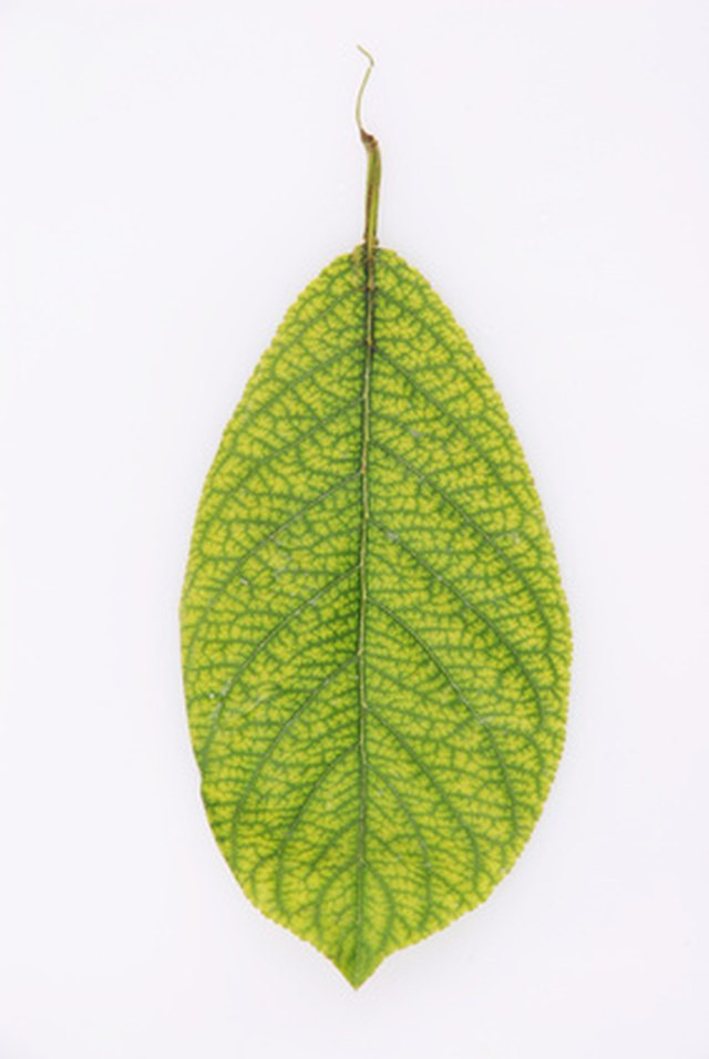 Simple Leaf Identification | Hunker