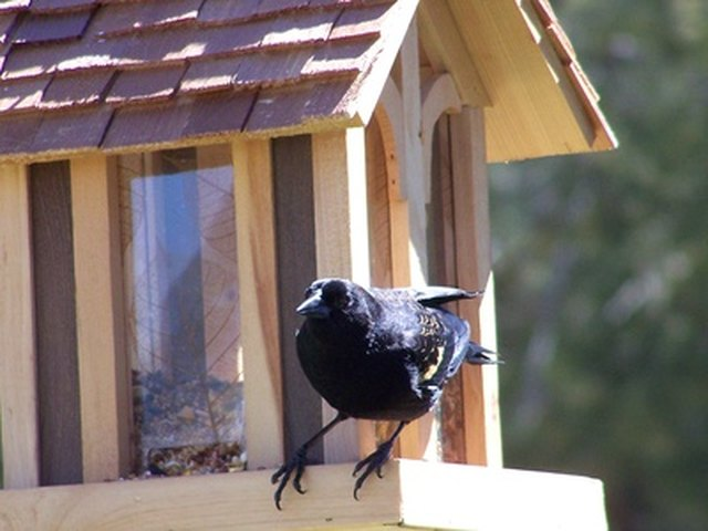 How to Keep Cats Away From Bird Feeders | Hunker