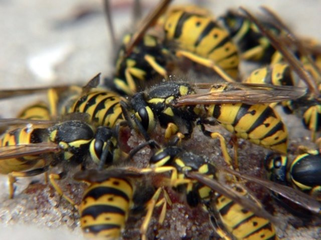 How To Kill Wasps With Wd40 Hunker