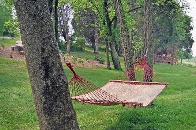 How Far Apart Should Trees Be For A Hammock Hunker