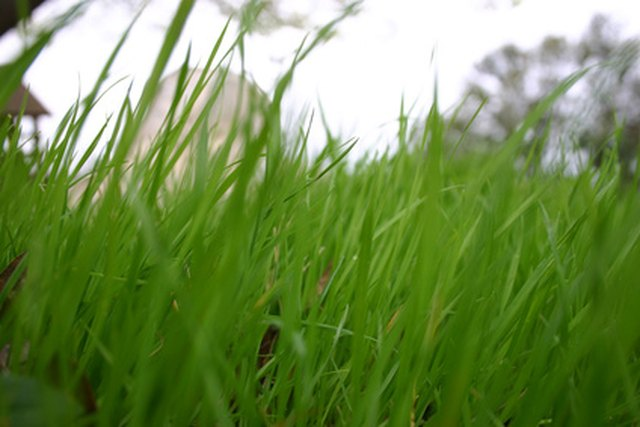 Signs That Lawn Is Acidic | Hunker