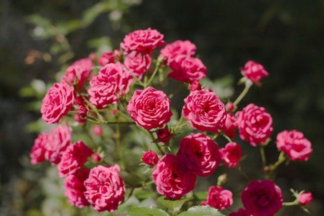 List Of Different Types Of Flowering Plants Hunker