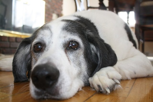 How To Remove Dog Urine Odor From A Tile Floor Hunker - How to clean dog urine from tile floors