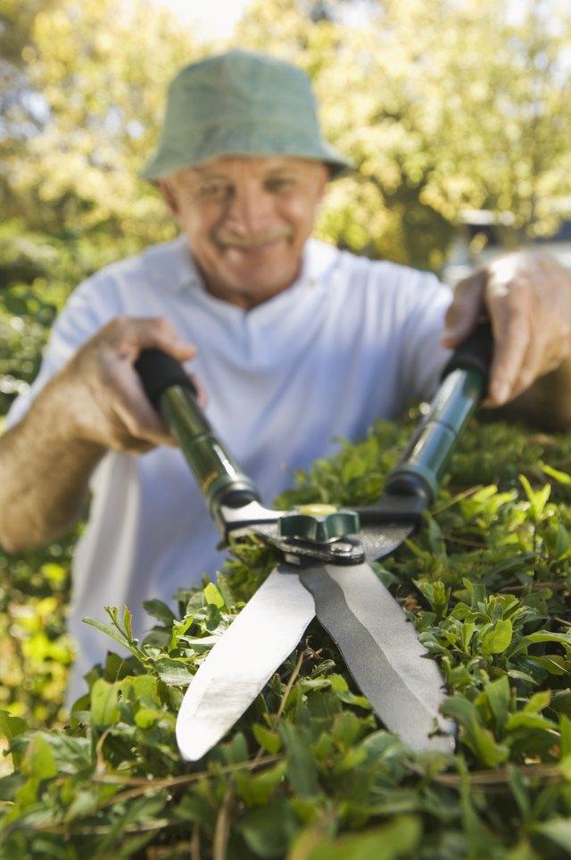 Man trimming hedges