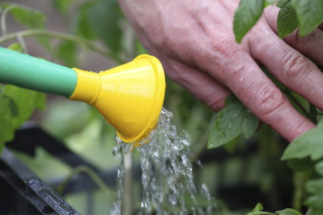 How To Get Rid Of Mold In Plant Soil Hunker