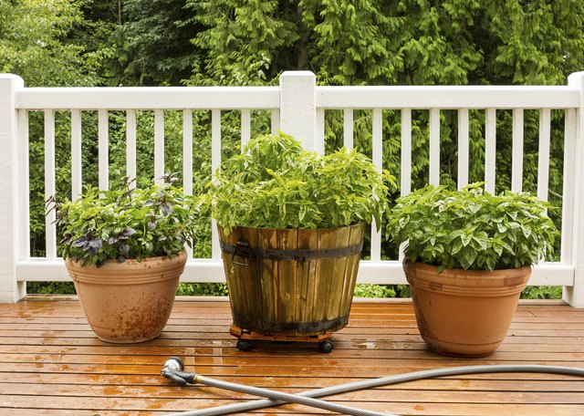 Large Pots filled with Herbs on Cedar Deck