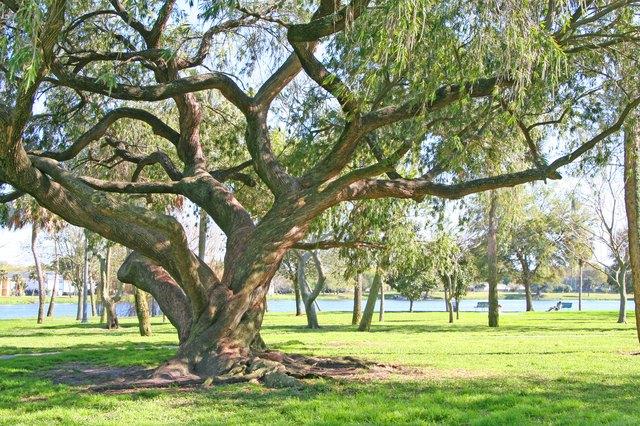 Shade of the Grand Oak
