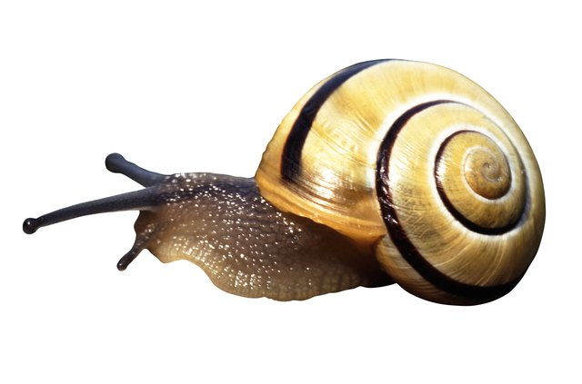 Snail against white background, close-up