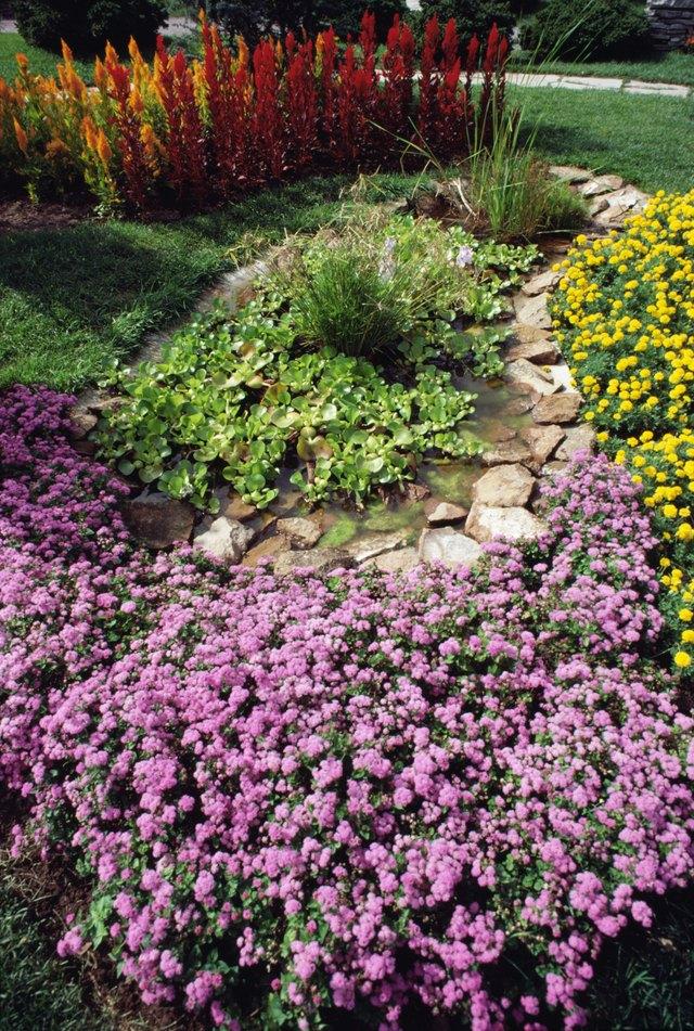 The best groundcover for full sun and clay soil hunker grasses mightylinksfo