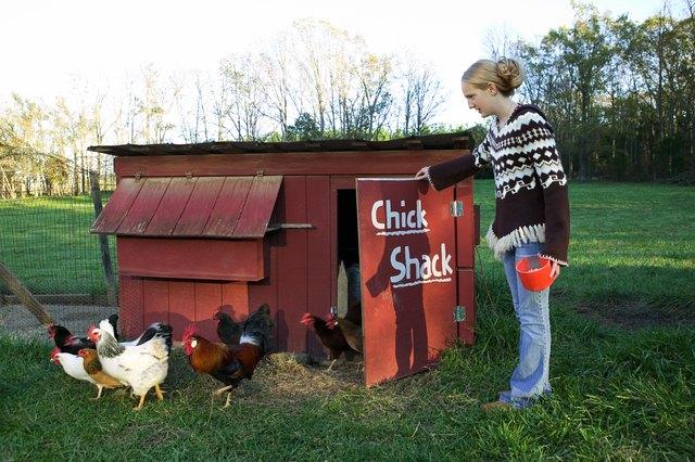 Teenage girl feeding chickens