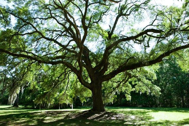 Bare tree in park