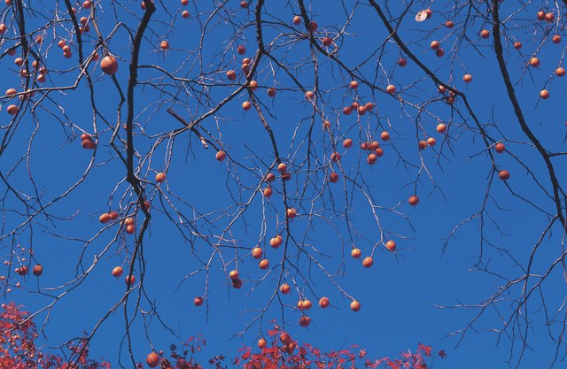 Branches of fruit tree