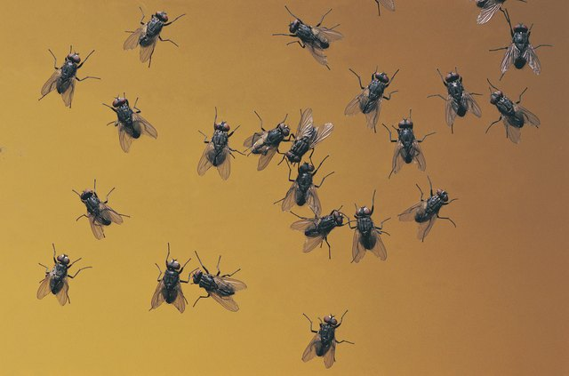 Flies Are An Unattractive And Annoying Outdoor Pest.