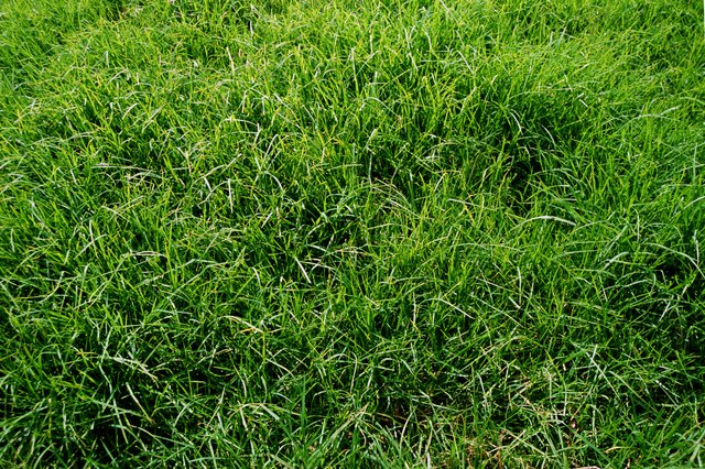 How to Kill Annual Rye Grass | Hunker