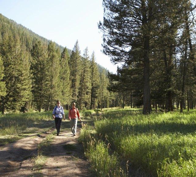 Two women walking along footpath in pine tree forest