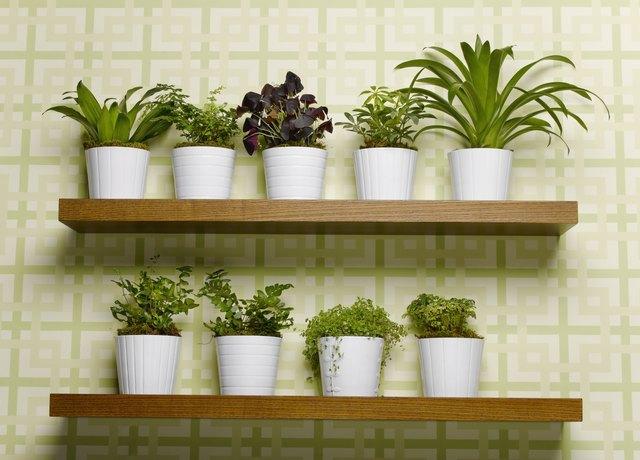 Pot plant arranged on shelf, close-up