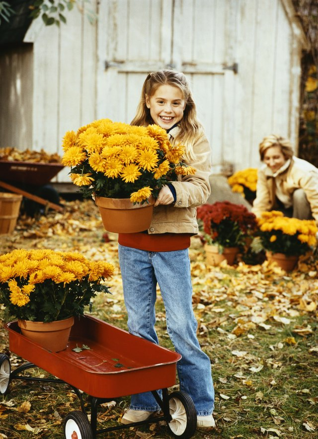 Smiling Young Girl Stands in Her Garden Holding a Pot of Chrysanthemums, Her Mother in the Background