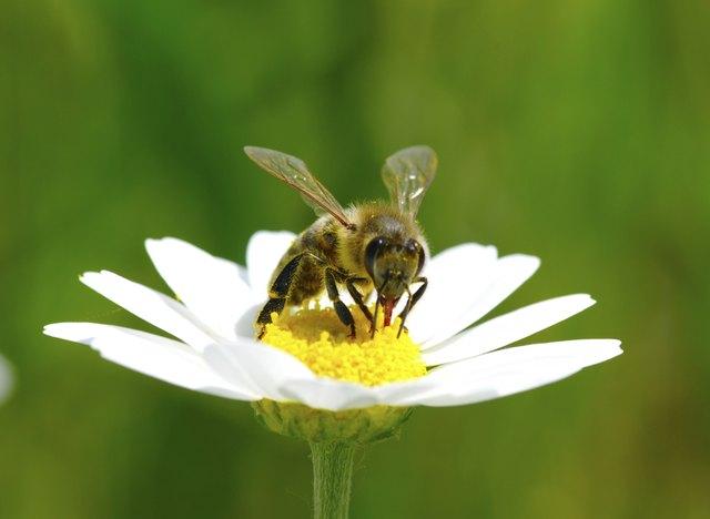 Plants That Keep Wasps Away Hunker