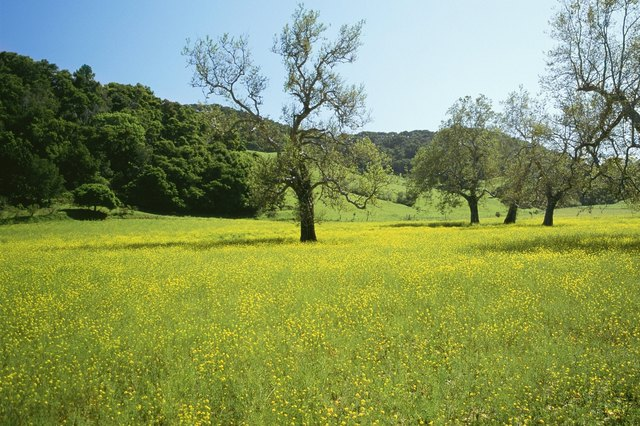 USA, California, Cambria, Highway 1, Trees in a field