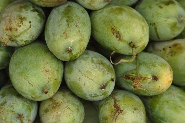 How to Transplant a Mango Tree | Hunker