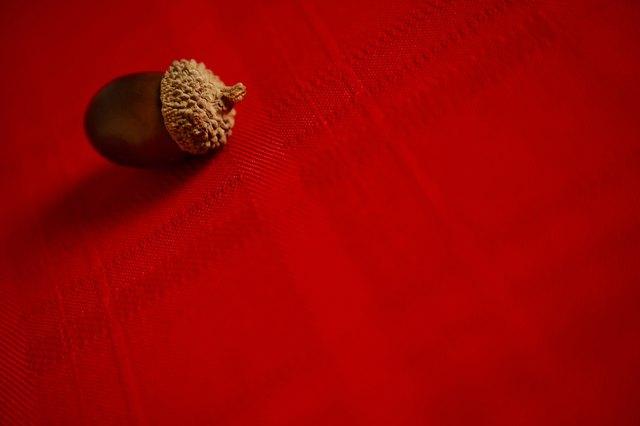 Acorn on tablecloth