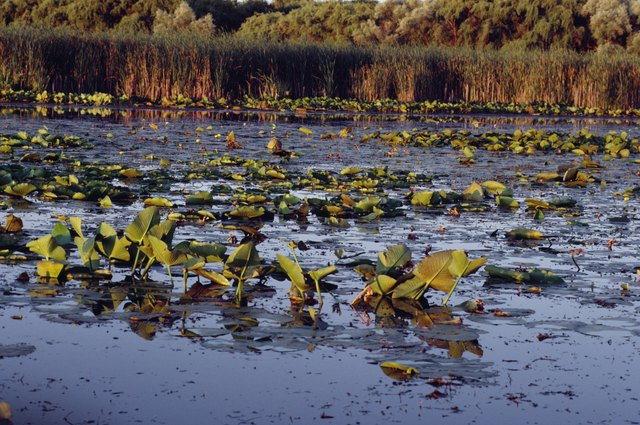 Plants growing in shallow swampland