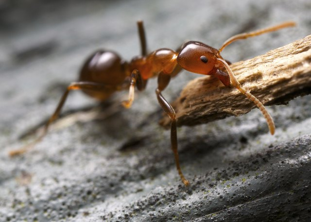 Small ant working