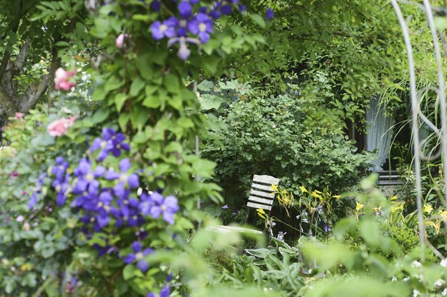 Plants and flowers in garden