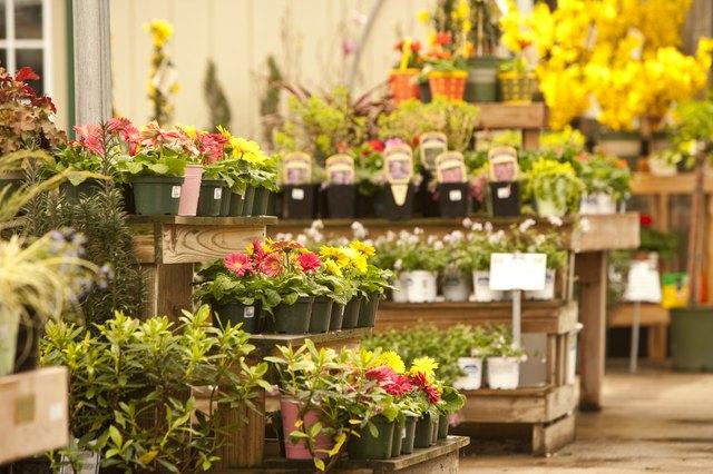 Flowers in a garden store