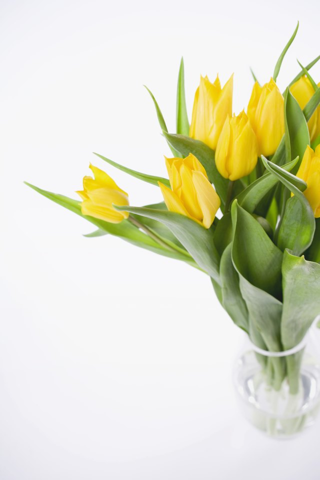 How To Grow Tulips In A Vase With Rocks Water Hunker