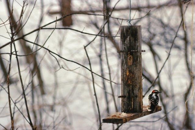 Bird at birdfeeder in winter