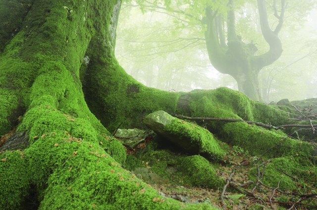 Moss Facts | Hunker
