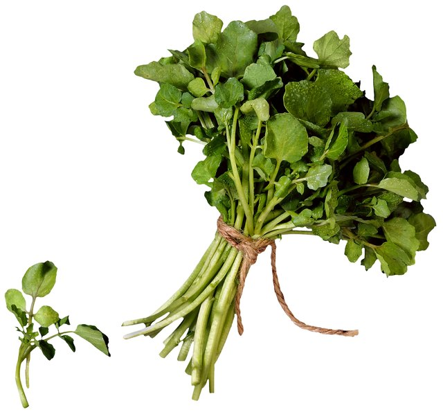 How to Grow Watercress Hydroponically | Hunker