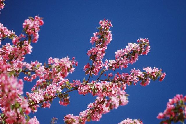 Blossom Identification | Hunker