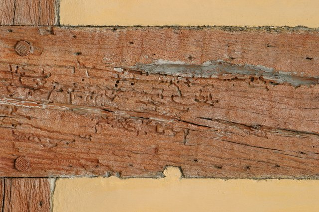 Wooden support beam in wall