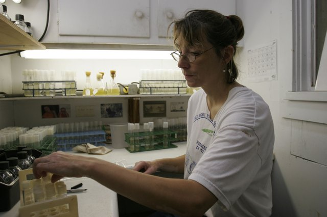 Red Tide Puts Strain On Clam Industry In Cape Cod