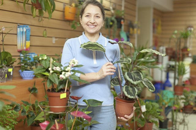 woman with  Calathea plant  in flower store