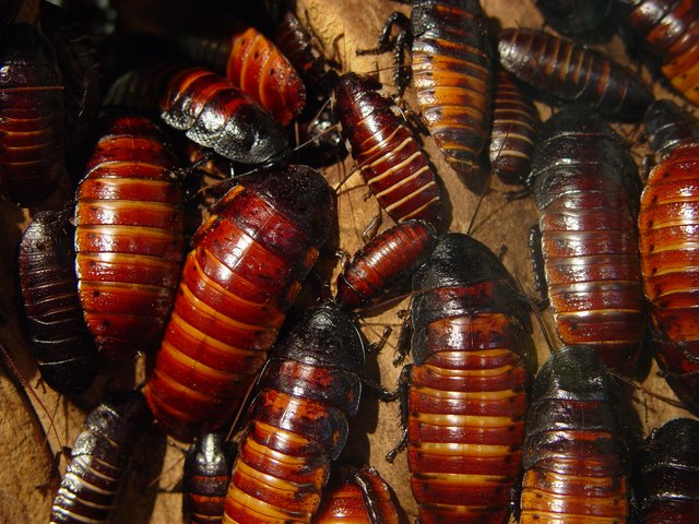 Lots of Cockroaches