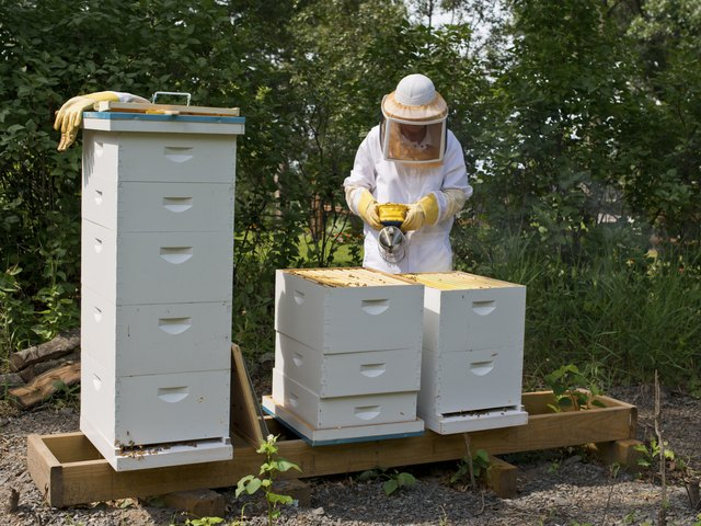 How to Build a Beehive | Hunker