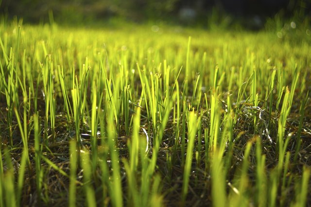 Grass regenerate in the garden.