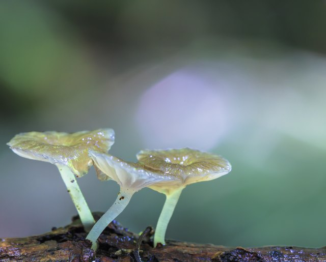 Wild mushrooms growing on a forest log