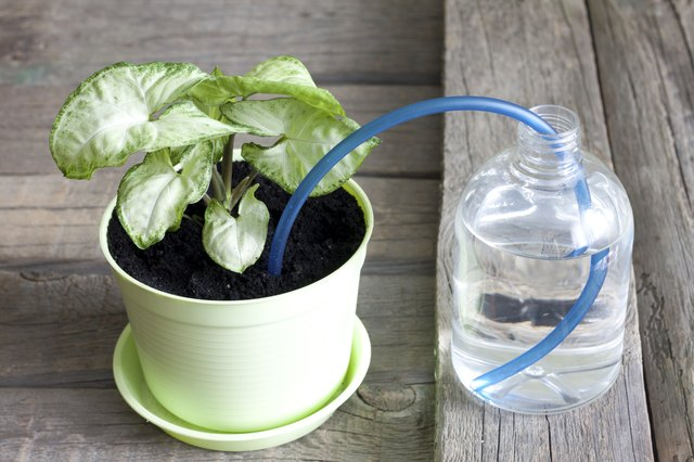 How Does A Self Watering Planter Work Hunker
