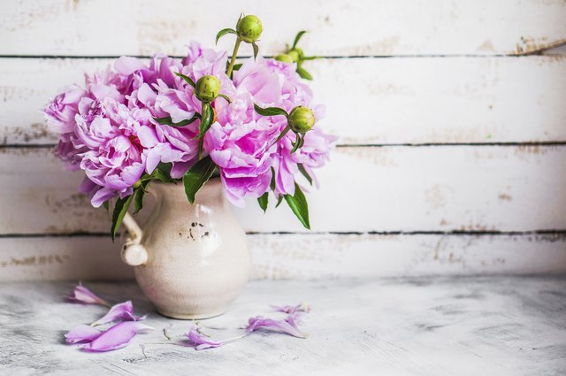 How To Cut Peonies For A Vase Hunker